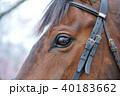 馬 目 瞳 40183662