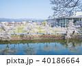 松が岬公園 桜 春の写真 40186664