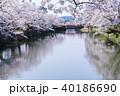 松が岬公園 桜 春の写真 40186690
