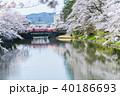 松が岬公園 桜 春の写真 40186693