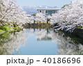 松が岬公園 桜 春の写真 40186696