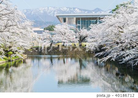 松が岬公園の桜 40186712