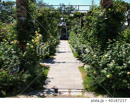 夏の日の薔薇咲くガーデン 40187257