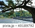 京都 風景 新緑の写真 40189792