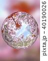満開の桜(ミラーボール表現) 40190026