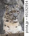 哺乳類 動物 陸上動物の写真 40192954