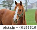 サラブレッド 馬 40196616