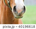 サラブレッド 馬 40196618