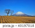 羊蹄山と双子のサクランボの木 40197018