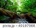 森 ジャングル ユツン川の写真 40197066