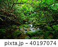 森 ジャングル ユツン川の写真 40197074