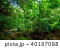 森 ジャングル ユツン川の写真 40197088