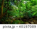 森 ジャングル ユツン川の写真 40197089
