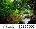 森 ジャングル ユツン川の写真 40197093