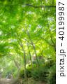 新緑の木洩れ日 40199987