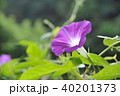 花 夏 植物の写真 40201373