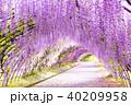 河内藤園 トンネル 藤の写真 40209958