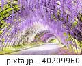 河内藤園 トンネル 藤の写真 40209960