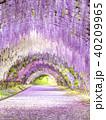河内藤園 トンネル 藤の写真 40209965