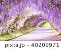 河内藤園 トンネル 藤の写真 40209971