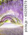 河内藤園 トンネル 藤の写真 40209979