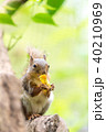 ニホンリス 井の頭自然文化園 40210969