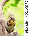 ニホンリス 井の頭自然文化園 40210972