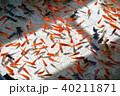 金魚すくい 40211871