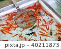 金魚すくい 40211873