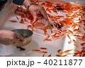 金魚すくい 40211877