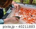金魚すくい 40211883