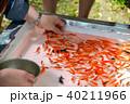 金魚掬い ポイ 金魚の写真 40211966