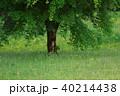 新緑 40214438