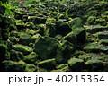 階段 石段 苔の写真 40215364