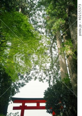 鳥居のある森の風景 40215373