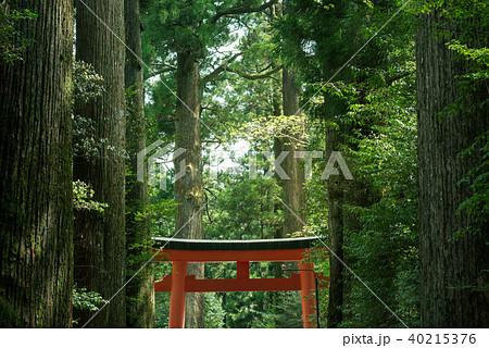鳥居のある森の風景 40215376