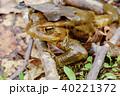 蛙 40221372