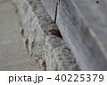 トカゲ 蜥蜴 爬虫類の写真 40225379