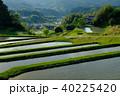 棚田 夕方 水田の写真 40225420