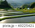 棚田 夕方 水田の写真 40225421