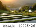 棚田 夕方 水田の写真 40225426