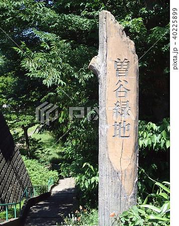 曽谷緑地 40225899
