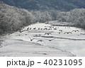樹氷 冬 雪裡川の写真 40231095
