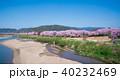 背割堤 桜 春の写真 40232469