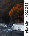【紅葉最盛期】吹割の滝・吹割渓谷の紅葉(午後) 40233444