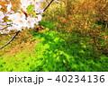 桜が咲いた 40234136