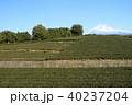 茶畑 静岡 風景の写真 40237204