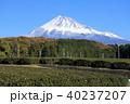 茶畑 静岡 風景の写真 40237207