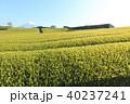 茶畑 静岡 風景の写真 40237241