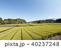 茶畑 静岡 風景の写真 40237248